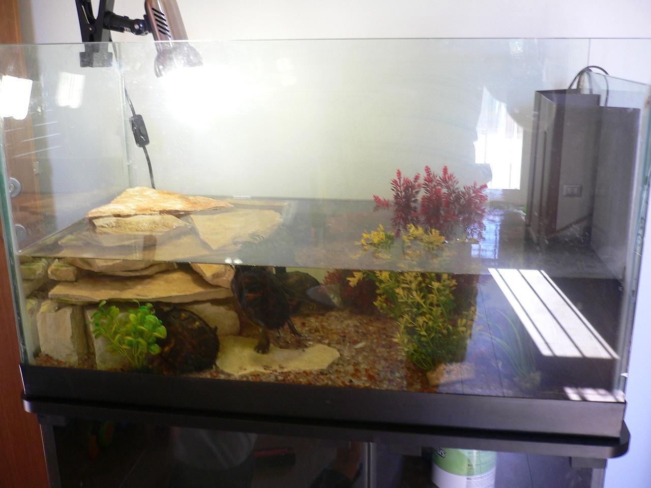 Le mie tartarughe amici pappagalli ornitorreglia for Tartarughe per acquario
