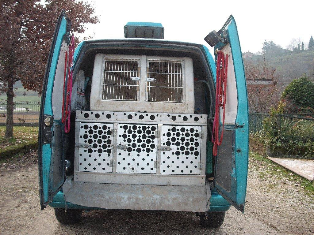 Furgone 5 Posti Attrezzato Per Trasporto Cani