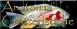 Anatomia e caratteristiche comuni dei pesci