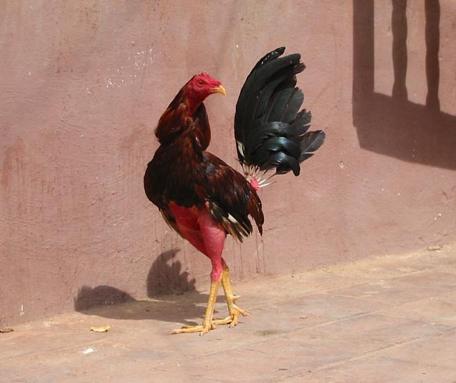 come ottenere un grande gallo Naturaly erotico ragazza nuda immagini